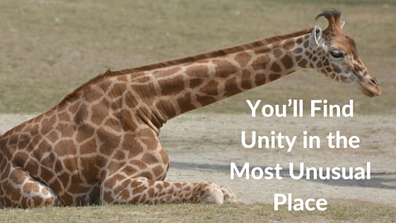 You'll Find Unity in the Most Unusual Place
